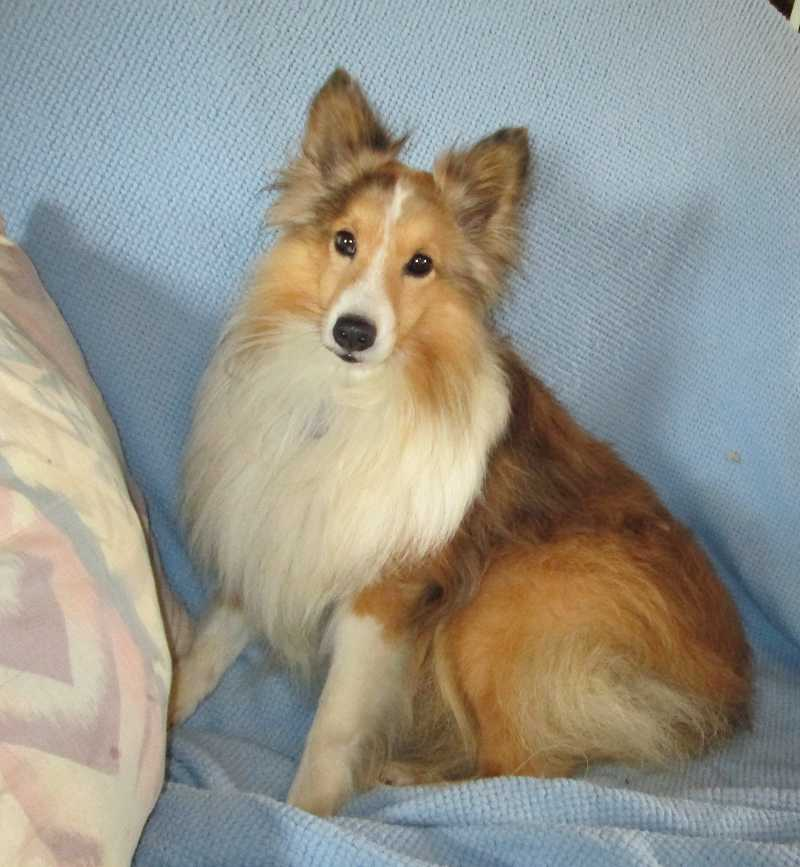 illinoissheltierescue.com