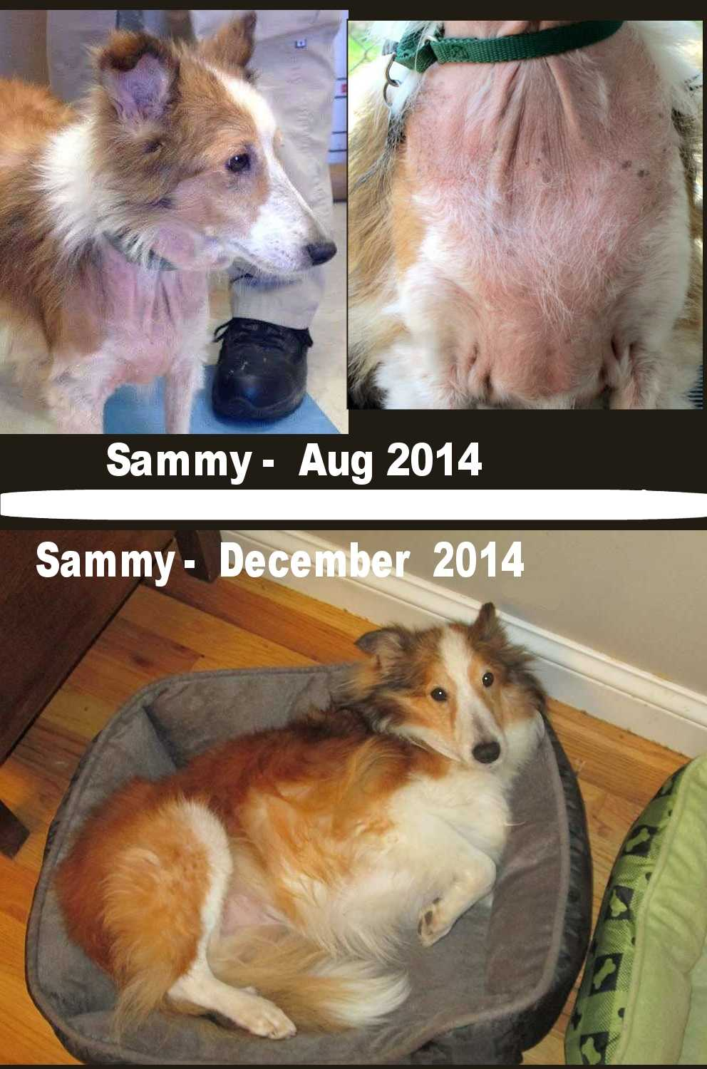 Sammy before and after
