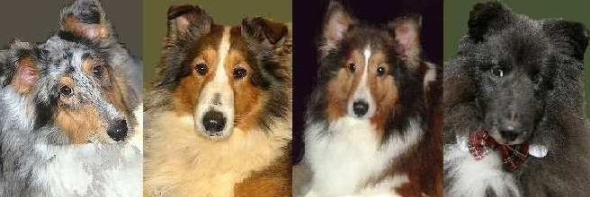 Central Illinois Sheltie Rescue Banner